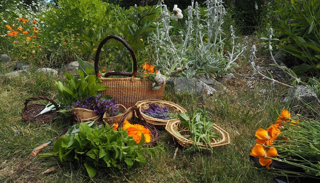 harvest colours